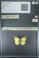 http://mczbase.mcz.harvard.edu/specimen_images/ent-lepidoptera/images/2013_03_12/IMG_138972.JPG