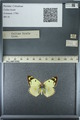 http://mczbase.mcz.harvard.edu/specimen_images/ent-lepidoptera/images/2013_03_12/IMG_138973.JPG