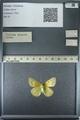 http://mczbase.mcz.harvard.edu/specimen_images/ent-lepidoptera/images/2013_03_12/IMG_138988.JPG