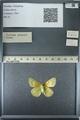 http://mczbase.mcz.harvard.edu/specimen_images/ent-lepidoptera/images/2013_03_12/IMG_138989.JPG
