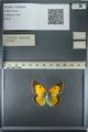 http://mczbase.mcz.harvard.edu/specimen_images/ent-lepidoptera/images/2013_03_12/IMG_138990.JPG