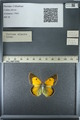 http://mczbase.mcz.harvard.edu/specimen_images/ent-lepidoptera/images/2013_03_12/IMG_138991.JPG