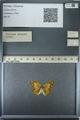 http://mczbase.mcz.harvard.edu/specimen_images/ent-lepidoptera/images/2013_03_12/IMG_138992.JPG