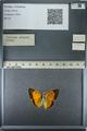 http://mczbase.mcz.harvard.edu/specimen_images/ent-lepidoptera/images/2013_03_12/IMG_138995.JPG