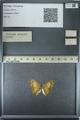 http://mczbase.mcz.harvard.edu/specimen_images/ent-lepidoptera/images/2013_03_12/IMG_138996.JPG