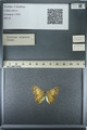 http://mczbase.mcz.harvard.edu/specimen_images/ent-lepidoptera/images/2013_03_12/IMG_138997.JPG