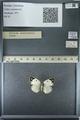 http://mczbase.mcz.harvard.edu/specimen_images/ent-lepidoptera/images/2013_03_12/IMG_139005.JPG
