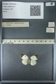 http://mczbase.mcz.harvard.edu/specimen_images/ent-lepidoptera/images/2013_03_12/IMG_139006.JPG