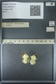 http://mczbase.mcz.harvard.edu/specimen_images/ent-lepidoptera/images/2013_03_12/IMG_139007.JPG