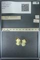 http://mczbase.mcz.harvard.edu/specimen_images/ent-lepidoptera/images/2013_03_12/IMG_139008.JPG