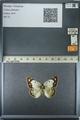 http://mczbase.mcz.harvard.edu/specimen_images/ent-lepidoptera/images/2013_03_12/IMG_139013.JPG