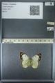 http://mczbase.mcz.harvard.edu/specimen_images/ent-lepidoptera/images/2013_03_12/IMG_139014.JPG