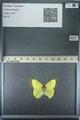 http://mczbase.mcz.harvard.edu/specimen_images/ent-lepidoptera/images/2013_03_12/IMG_139015.JPG