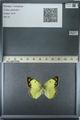 http://mczbase.mcz.harvard.edu/specimen_images/ent-lepidoptera/images/2013_03_12/IMG_139016.JPG