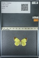 http://mczbase.mcz.harvard.edu/specimen_images/ent-lepidoptera/images/2013_03_12/IMG_139019.JPG
