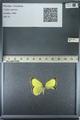 http://mczbase.mcz.harvard.edu/specimen_images/ent-lepidoptera/images/2013_03_12/IMG_139021.JPG