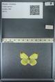 http://mczbase.mcz.harvard.edu/specimen_images/ent-lepidoptera/images/2013_03_12/IMG_139022.JPG