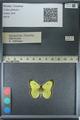 http://mczbase.mcz.harvard.edu/specimen_images/ent-lepidoptera/images/2013_03_12/IMG_139293.JPG