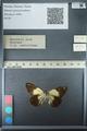 http://mczbase.mcz.harvard.edu/specimen_images/ent-lepidoptera/images/2013_03_15/IMG_139785.JPG