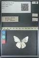 http://mczbase.mcz.harvard.edu/specimen_images/ent-lepidoptera/images/2013_03_26/IMG_140436.JPG