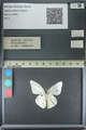 http://mczbase.mcz.harvard.edu/specimen_images/ent-lepidoptera/images/2013_03_26/IMG_140437.JPG