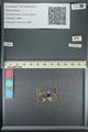http://mczbase.mcz.harvard.edu/specimen_images/ent-lepidoptera/images/2013_04_12/IMG_141259.JPG