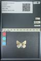 http://mczbase.mcz.harvard.edu/specimen_images/ent-lepidoptera/images/2013_04_13/IMG_141409.JPG