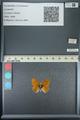 http://mczbase.mcz.harvard.edu/specimen_images/ent-lepidoptera/images/2013_04_13/IMG_141413.JPG
