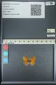 http://mczbase.mcz.harvard.edu/specimen_images/ent-lepidoptera/images/2013_04_13/IMG_141415.JPG