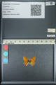 http://mczbase.mcz.harvard.edu/specimen_images/ent-lepidoptera/images/2013_04_13/IMG_141416.JPG