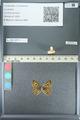 http://mczbase.mcz.harvard.edu/specimen_images/ent-lepidoptera/images/2013_04_15/IMG_141569.JPG
