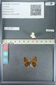 http://mczbase.mcz.harvard.edu/specimen_images/ent-lepidoptera/images/2013_04_15/IMG_141570.JPG