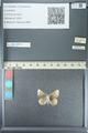 http://mczbase.mcz.harvard.edu/specimen_images/ent-lepidoptera/images/2013_04_15/IMG_141571.JPG