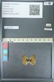 http://mczbase.mcz.harvard.edu/specimen_images/ent-lepidoptera/images/2013_04_15/IMG_141572.JPG