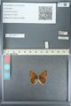 http://mczbase.mcz.harvard.edu/specimen_images/ent-lepidoptera/images/2013_04_15/IMG_141573.JPG