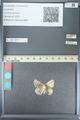 http://mczbase.mcz.harvard.edu/specimen_images/ent-lepidoptera/images/2013_04_15/IMG_141574.JPG