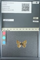 http://mczbase.mcz.harvard.edu/specimen_images/ent-lepidoptera/images/2013_04_15/IMG_141575.JPG