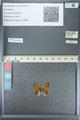 http://mczbase.mcz.harvard.edu/specimen_images/ent-lepidoptera/images/2013_04_15/IMG_141598.JPG