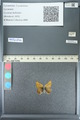 http://mczbase.mcz.harvard.edu/specimen_images/ent-lepidoptera/images/2013_04_15/IMG_141600.JPG