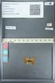 http://mczbase.mcz.harvard.edu/specimen_images/ent-lepidoptera/images/2013_04_15/IMG_141601.JPG