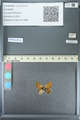 http://mczbase.mcz.harvard.edu/specimen_images/ent-lepidoptera/images/2013_04_15/IMG_141602.JPG