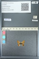 http://mczbase.mcz.harvard.edu/specimen_images/ent-lepidoptera/images/2013_04_15/IMG_141604.JPG