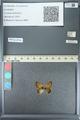 http://mczbase.mcz.harvard.edu/specimen_images/ent-lepidoptera/images/2013_04_15/IMG_141605.JPG
