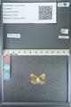 http://mczbase.mcz.harvard.edu/specimen_images/ent-lepidoptera/images/2013_04_15/IMG_141608.JPG