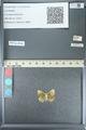 http://mczbase.mcz.harvard.edu/specimen_images/ent-lepidoptera/images/2013_04_15/IMG_141609.JPG