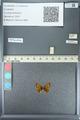 http://mczbase.mcz.harvard.edu/specimen_images/ent-lepidoptera/images/2013_04_15/IMG_141612.JPG