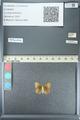 http://mczbase.mcz.harvard.edu/specimen_images/ent-lepidoptera/images/2013_04_15/IMG_141615.JPG
