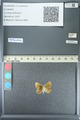 http://mczbase.mcz.harvard.edu/specimen_images/ent-lepidoptera/images/2013_04_15/IMG_141616.JPG