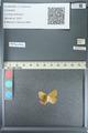 http://mczbase.mcz.harvard.edu/specimen_images/ent-lepidoptera/images/2013_04_15/IMG_141617.JPG