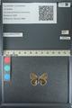 http://mczbase.mcz.harvard.edu/specimen_images/ent-lepidoptera/images/2013_04_16/IMG_141681.JPG